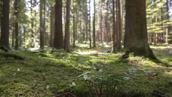 An der HESO-Sonderschau soll der Bevölkerung aufgezeigt werden, auf welche Art und Weise der Wald Kraft spendet. (Symbolbild)