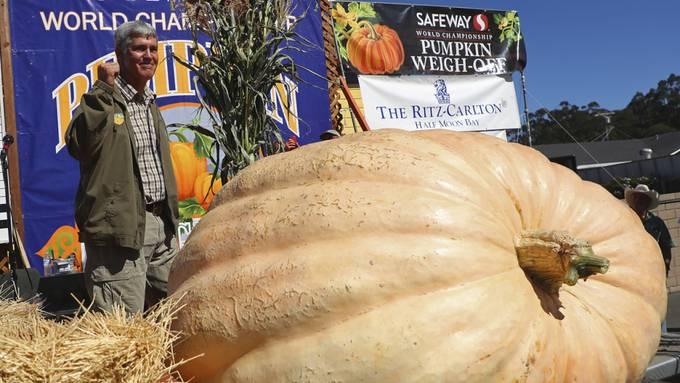 In New York kann man pünktlich zum Halloweenfest riesige Kürbisse bestaunen. (Symbolbild)
