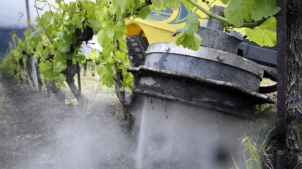 Das Wallis testet eine natürliche Unkrautvertilgungsmethode: Reines Leitungswasser schiesst mit Hochdruck aus einer Maschine vertikal auf den Boden und vernichtet dabei unerwünschtes Grünzeug.