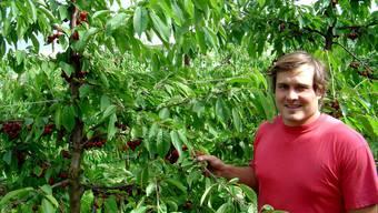 Matthias Schmid aus Gipf-Oberfrick ist mit dem Behang der Bäume zufrieden und freut sich auf eine gute Kirschenernte.  kpf