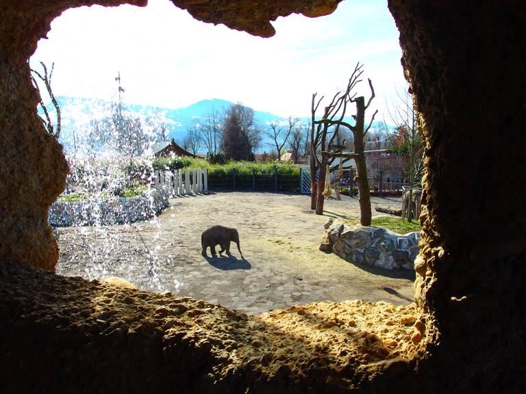 Himmapan -  der neue Elefantenpark im Knies Kinderzoo