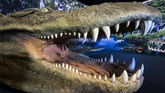 Mit seinen gut 12 Metern war der Purussaurus in Venezuela der König der Krokodile. zvg