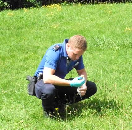 Ein Beamter der Stadtpolizei sichert einen der neu ausgelegten Köder.