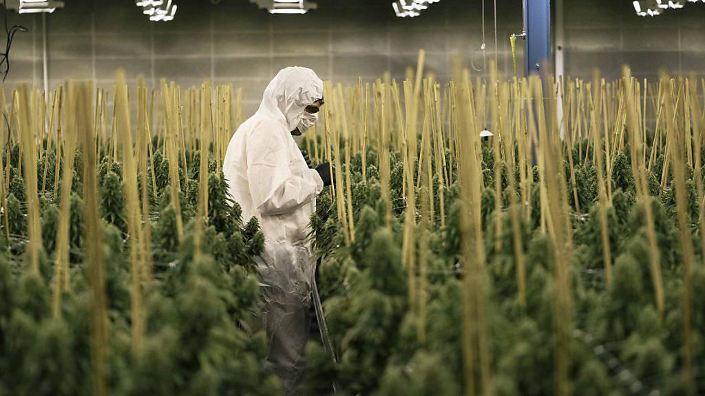 In Kanada soll der Konsum von Cannabis bald völlig legal sein - damit löst der kanadische Premierminister Justin Trudeau eines seiner Wahlkampfversprechen ein. (Archivbild)