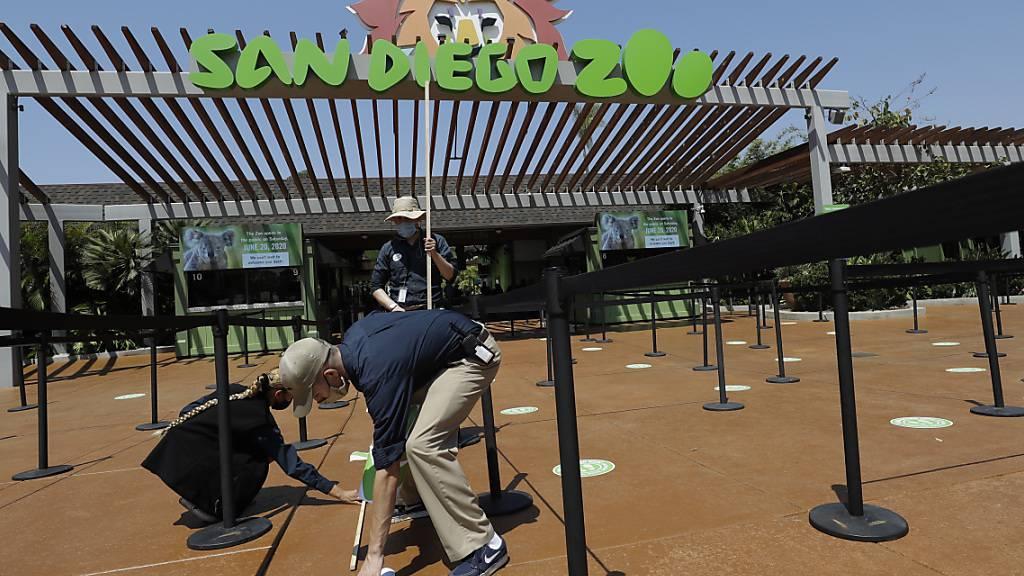 ARCHIV - Im Zoo von San Diego im US-Bundesstaat Kalifornien sind die ersten Menschenaffen gegen Covid-19 geimpft worden. Foto: Gregory Bull/AP/dpa