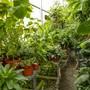 Der Botanische Garten. Wegen dem Umbau stehen die Pflanzen in Kübeln in einem Provisorium.