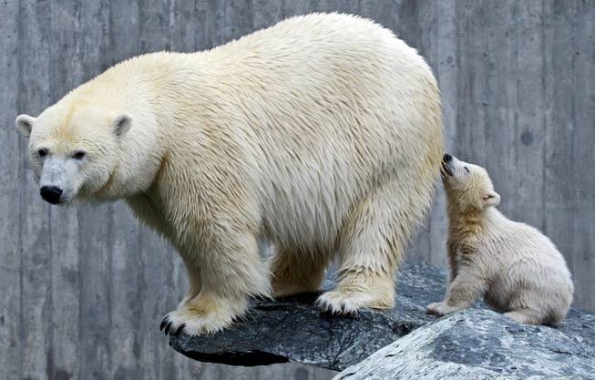 Knut (r.) als ganz Kleiner