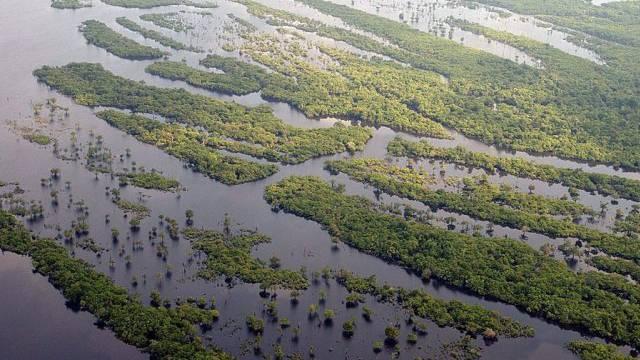 Jede Minute werden drei Fussballfelder Amazonaswald zerstört