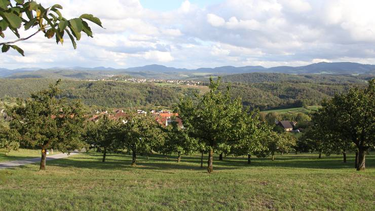 Kirschbäume gehören zu Nuglar-St.Pantaleon. (B. Saladin)