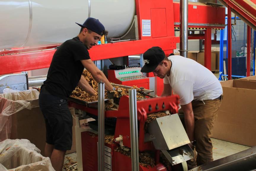 Die Mitarbeiter von Roger Koch haben alle Hände voll zu tun (Bild: FM1Today/Lara Abderhalden).
