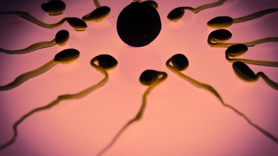 Qualität der Spermien in der Schweiz nimmt ab