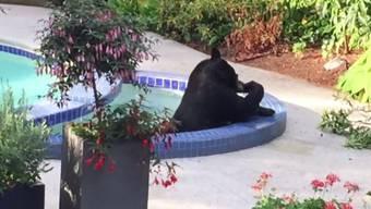 Erst ein Bad im Pool und dann noch ein wenig entspannen im warmen Whirlpool – dieser Bär weiss, wies geht.