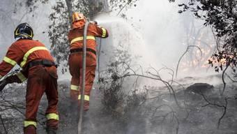 Verzweifelter Kampf gegen die Flammen im Wald von Castelfusano ausserhalb Roms, auf dem Weg zum Meer.