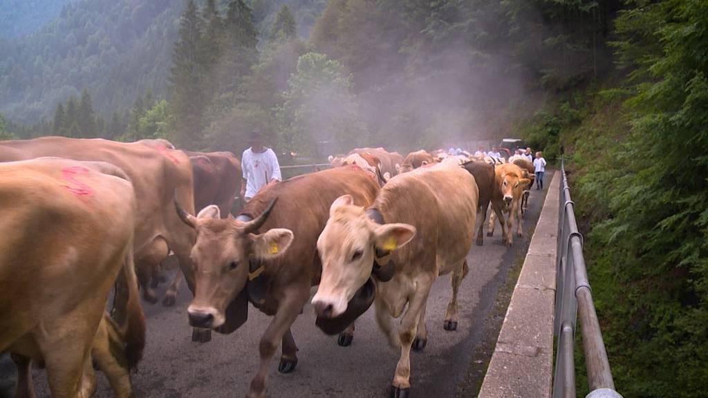 Zrugg uf d'Alp: Die nächste Generation