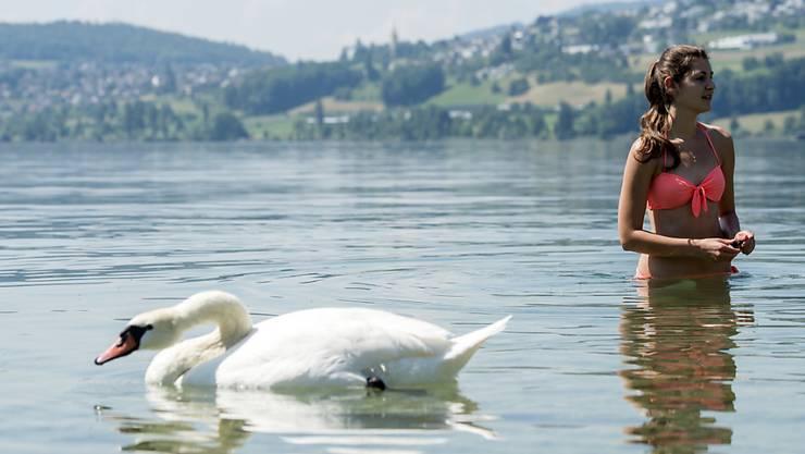 Unbedenklicher Spass: Ein Schwan und eine Badende geniessen den Hallwilersee. (Archiv)