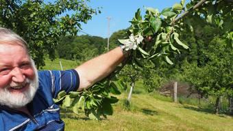 «In diesem Ausmass habe ich das noch nie erlebt»: Josef von Reding zeigt die neuen Blüten an einem der Apfelbäume.