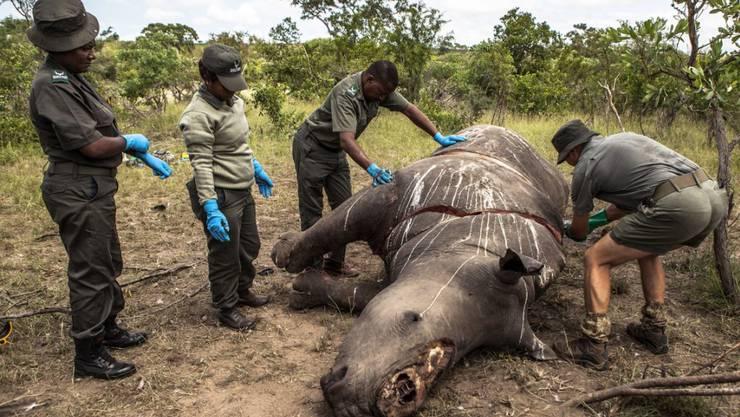 Nashorn-Wilderei ist im Krüger-Nationalpark in Südafrika weiter ein grosses Problem. (Archiv)