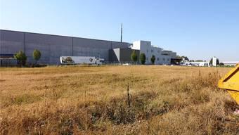 Der um die zehn Millionen Franken teure Neubau wird auf diese Wiese zwischen der Traitafina AG und der A1 zu stehen kommen.