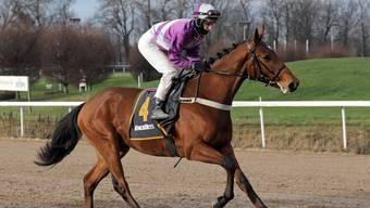 Sibylle Vogt ist in Deutschland die Nummer 1 der Frauen im Pferderennsport.