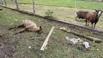 Bei einem Tierhalter in Oftringen AG wurden am Dienstag tote Tiere entdeckt. Die noch lebenden Tiere befanden sich in einem schlechten Zustand.