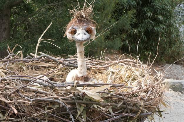 Neue Brutvogelart auf der Insel Brissago im Tessin
