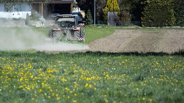 Laut den Forschenden könnten die Ergebnisse ihrer Studie dazu beitragen, die Pflanzenzüchtung in der Landwirtschaft verbessern. (Symbolbild)