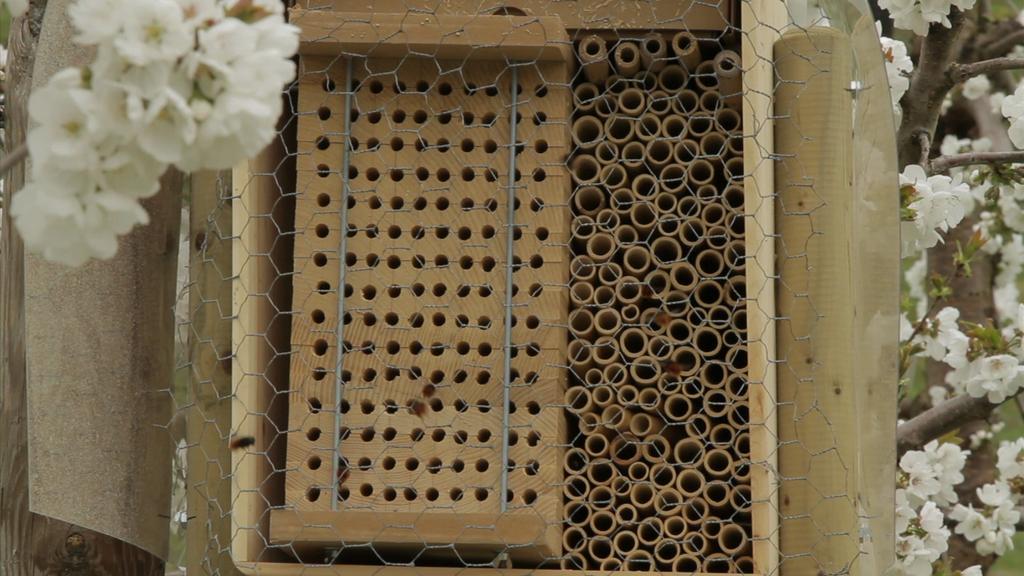 Die Bienen-Idee