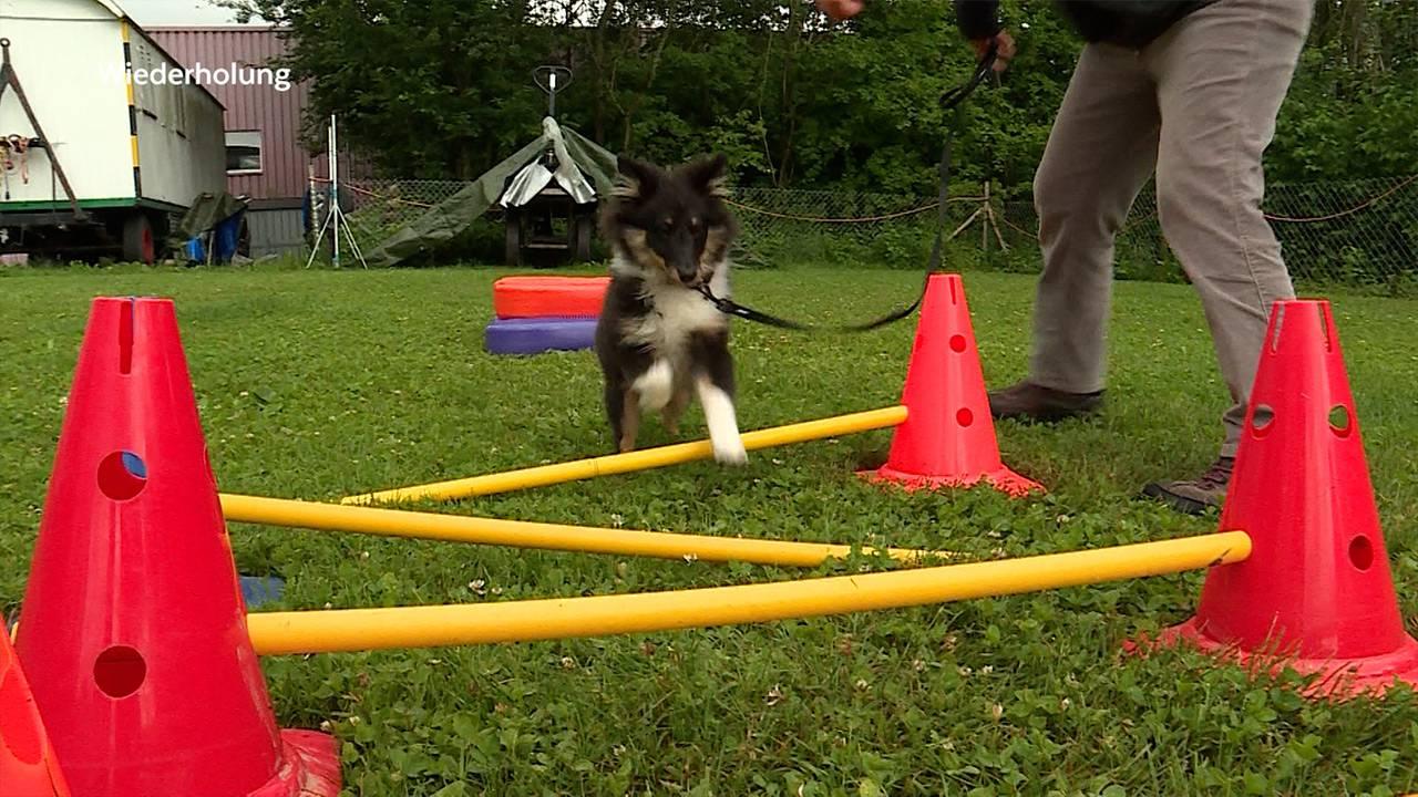 Gymnastikkurs-für-Hunde