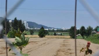 Das rund 40 Hektaren grosse Niderfeld ist die letzte grosse Baulandreserve in Dietikon.