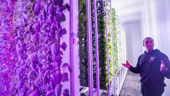 """Erste """"Vertical Farm"""" der Schweiz"""