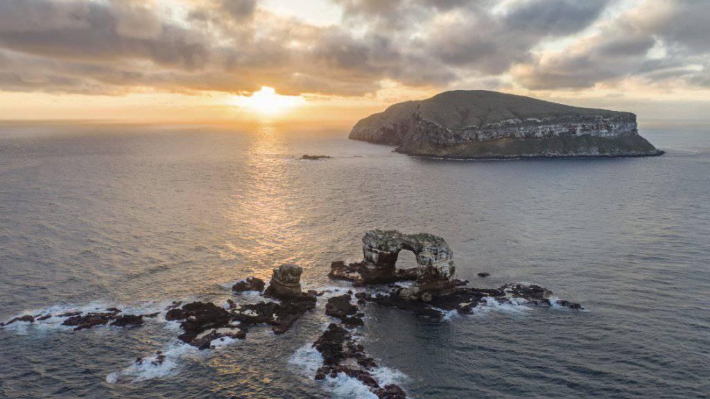 Der Vulkanausbruch auf der Galápagosinsel Isabela hat bislang keine grösseren Schäden für Flora und Fauna angerichtet. (Symbolbild)