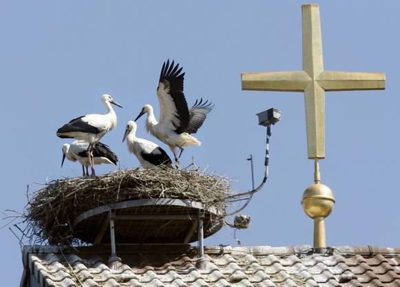 Hasen legen bekanntlich keine Eier, das weiss in Böhmen jedes Kind
