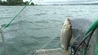 Fische, Krebse und Muscheln — die Bewerber wurden danach ausgewählt, wer sich auskennt und so eine nachhaltige und tierschutzgerechte Fischerei gewährleisten kann.