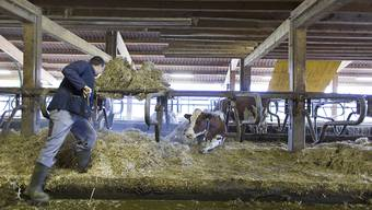 Das Schweizer Stimmvolk hat am Sonntag über mehrere Vorlagen abgestimmt, darunter zwei Agrar-Initiativen. (Symbolbild)