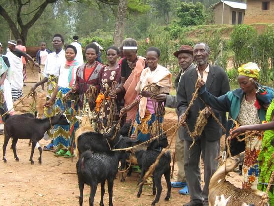 Viehspenden helfen: Immer mehr Menschen kriegen Geissen.