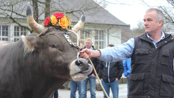 """Der Siegermuni: Braunviehstier """"Urner"""", geb. 23. Mai 2015. Besitzer: Margrit und Christoph Buser (Zunzgen). Spender: Raiffeisenbank Aarau-Lenzburg."""