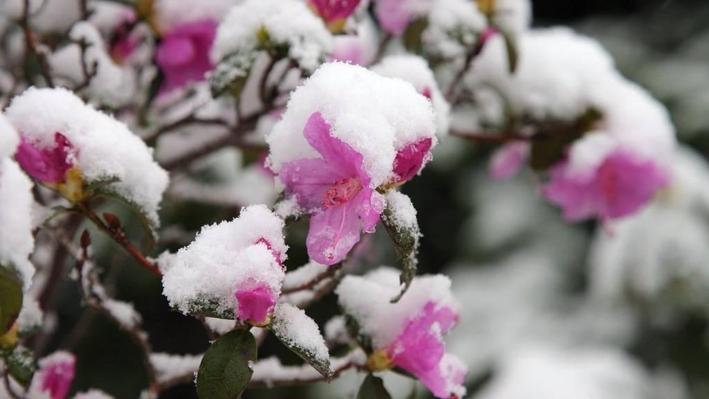 Das sind eure schönsten Schneebilder