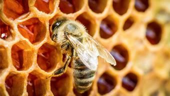 Die ganze Familie half mit, Honig abzufüllen. (Symbolbild)