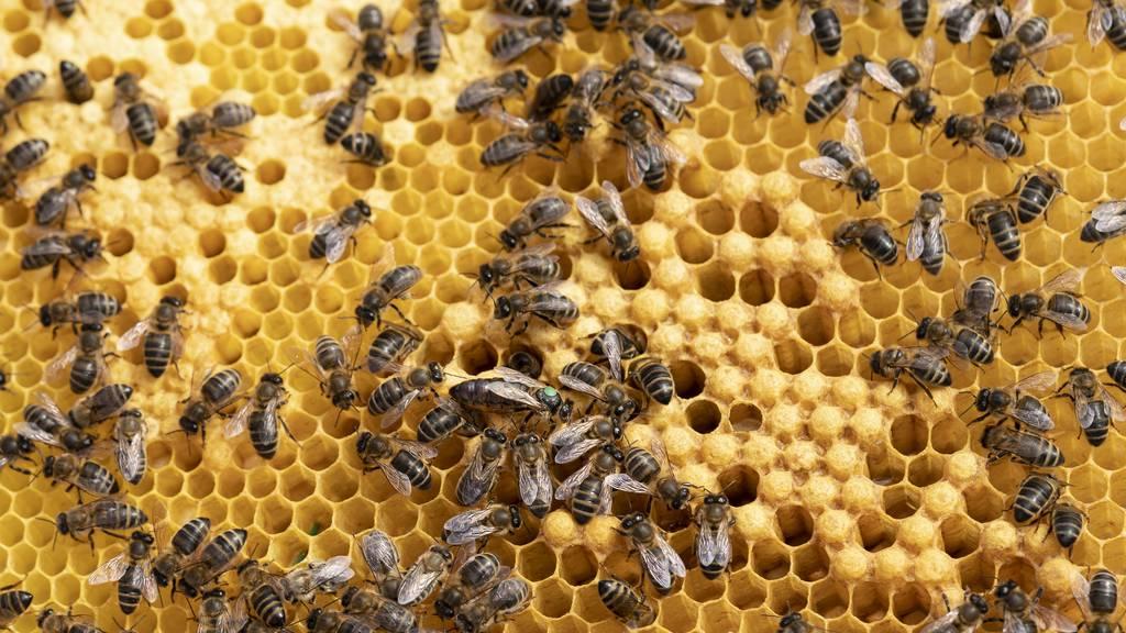 Der Berner Honig ist dieses Jahr rar