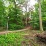 Die abgestorbenen Bäume im Hardwald sorgen für Sperrungen und Gefahr durch herabfallende Äste.