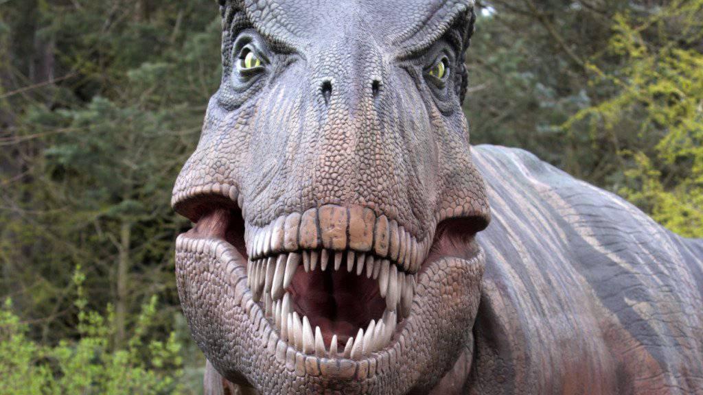 Mit seinem furchteinflössenden Gebiss könnte der Tyrannosaurus rex auch eigene Artgenossen verspiesen haben, vermuten Forscher nach einem Knochenfund in den USA. (Symbolbild)