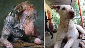 Die faszinierende Verwandlung eines indischen Strassenhundes.