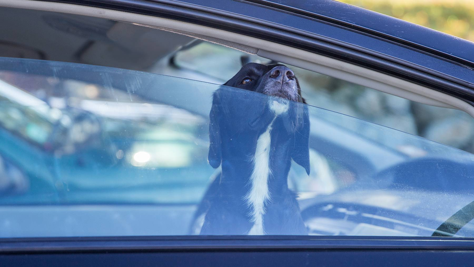 Hund Hitze Auto