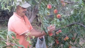 Ohne seinen Garten müsste Gregorys Familie in Lesvos hungern. zvg