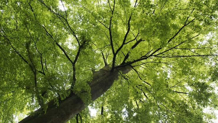 Die Zahlen der Forstbetriebsrechnung Werderamt sind solide.