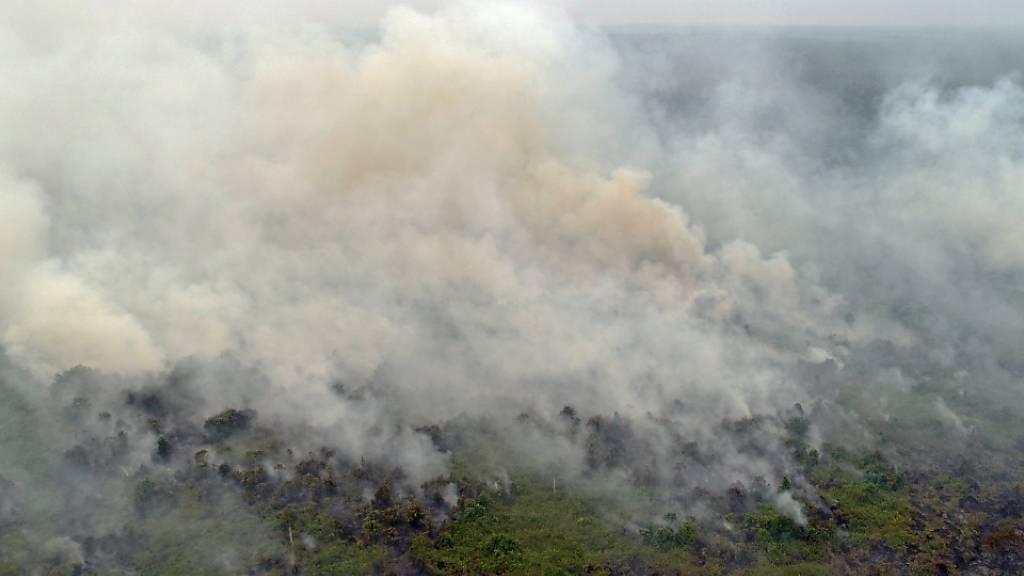 Schädliche Luftverschmutzung wegen Waldbränden auf Borneo