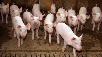 Nachhaltige Fleischbeschaffung aus artgerechter Tierhaltung