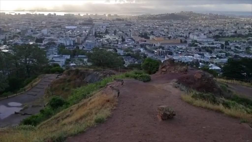 Kojoten zeigen sich vermehrt in San Francisco