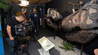Im Bellacher Sauriermuseum wird gedreht.