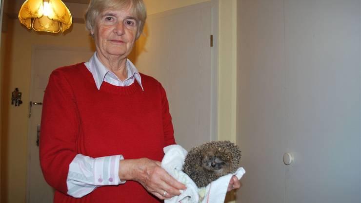 Anneliese Girlich, Fachfrau in der Rheinfelder Igelstation: «In diesem Jahr ist es katastrophal. Viele der Tiere sind unterernährt.»